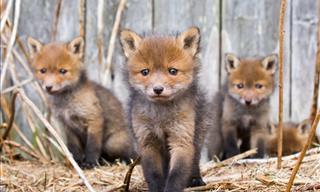 Fotógrafo Captura 21 Fotografías De Animales En Los Bosques De Finlandia