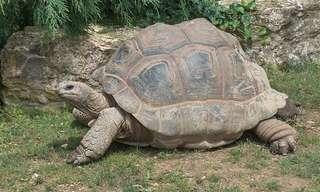 Los Animales Más Longevos Del Mundo
