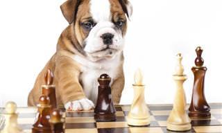 Test: ¿Puedes Adivinar Las Razas De Estos Perros?