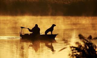Mira Cómo Estos Perros Pescan Enormes Salmones