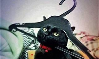 15 Gatos Traviesos En Apuros... ¿Cómo Saldrán De Esta?