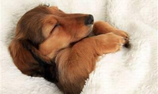 Test: ¿Eres Más Como Un Perro o Como Un Gato?