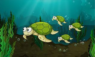 La Valiosa Historia De Las Cuatro Tortugas