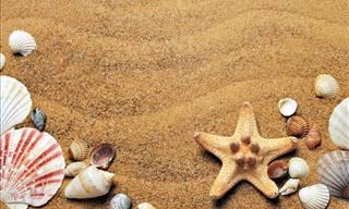 Que Tu Viaje a La Playa Sea Placentero y Seguro Con Estos 8 Consejos