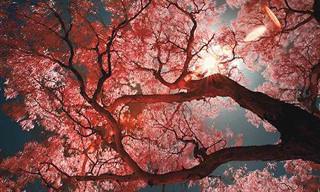 La Colorida Belleza De Los Árboles Japoneses