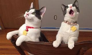 17 Gatitos Incapaces De Ocultar Sus Sentimientos