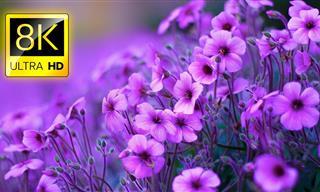 Estas Hermosas Flores Se Ven Más Lindas En Ultra HD