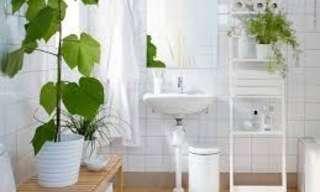 Las Mejores Plantas Para Decorar El Baño