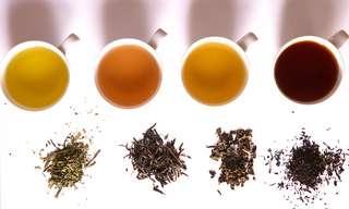¡Aprende a Cultivar y Preparar Tu Propio Té!