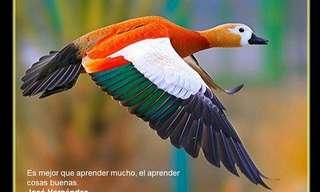 Las Citas de Famosos y Las Aves Más Hermosas