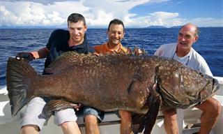 Chiste: Dos Compadres Van De Pesca