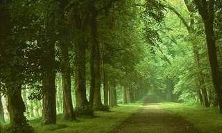 Elige El Camino De Tus Sueños…