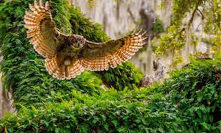 National Geographic: Mejor Fotógrafo De Naturaleza 2016