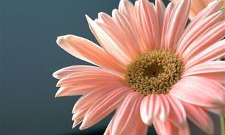 Mantén Estas Flores En Tu Habitación Para Dormir Mejor