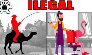 Las Leyes Más Raras De Los Estados Unidos