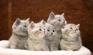 Nunca Imaginé Que Tener Un Gato Fuera Tan Beneficioso