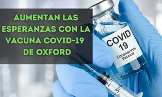 Covid-19 Actualización: Aumentan Las Esperanzas Con La Vacuna De Oxford