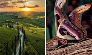 Estas Fotos Te Recordarán La Belleza Que Nos Rodea