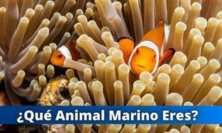 Test: ¿Qué Animal Marino Eres?