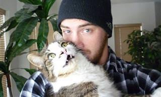 Estos 14 Gatos Odian Los Selfies