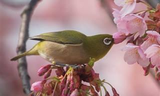 ¡Impresionante! Fotos De La Bella Naturaleza De Japón