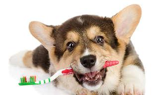 21 Excelentes Tips Para Los Dueños De Perros