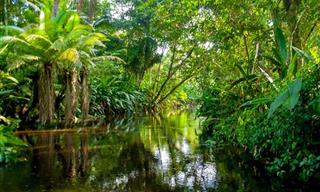 El Explorador Del Amazonas: Cuento Para Reflexionar
