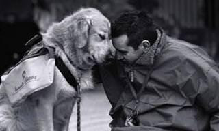 El Lado Más Cariñoso De Nuestros Amigos Los Perros