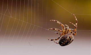 Por Qué No Deberías Matar a Las Arañas