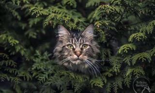 13 Imágenes De Gatos Que Han Demostrado Ser Los Mejores Modelos