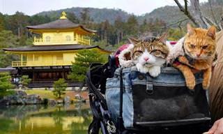 Daikichi y Fuku-Chan Los Gatos Viajeros De Japón