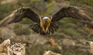 Las Aves Que Vuelan Más Alto Del Mundo