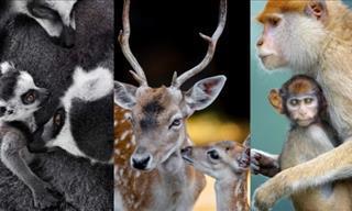 15 Imágenes De Animales Demostrando Su Amor Maternal