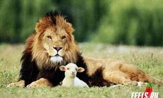 Hoy Los Animales Quieren Dar Amor...