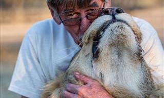 La Amistad De Este Hombre y Su León Te Llegará Al Corazón
