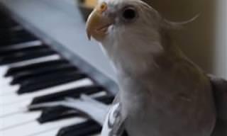 Video: Sin Duda Esta Es La Cacatúa Más Talentosa Del Mundo