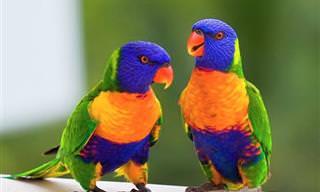 25 Hermosas Aves y Sus Espectaculares Colores