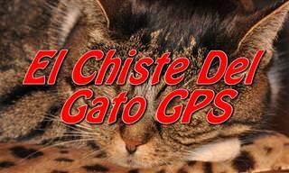 ¿Conoces El Chiste Del Gato GPS?