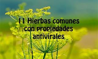 11 Hierbas Comunes Que Tienen Propiedades Antivirales