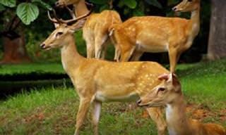 Imágenes De La Fauna De Birmania En Alta Definición