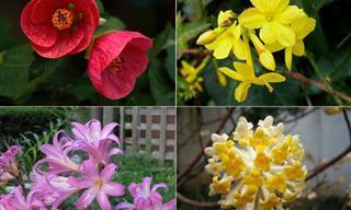 10 Flores Ideales Para Tu Jardín Durante Este Invierno