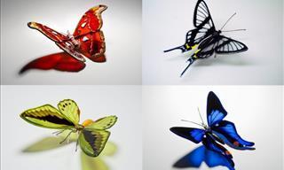 Imágenes De Arte En Cristal Mostrando 18 Mariposas En Peligro De Extinción