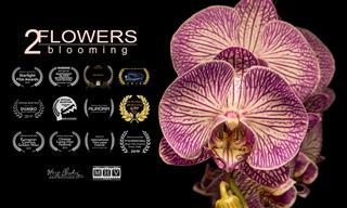 El Proceso De Floración De Una Flor En Detalle