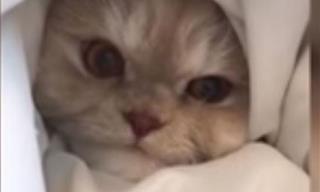 Divertido Video De Mascotas Que No Tuvieron El Mejor De Los Días