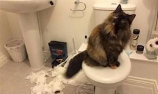 15 Divertidas Fotos De Gatos Siendo Gatos