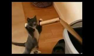 ¡Diviértete Con El Boxeo Felino!