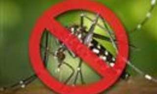 9 Plantas Para Deshacerte De Los Mosquitos
