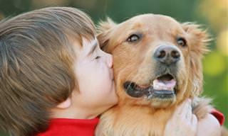 16 Datos Sorprendentes Acerca De Los Perros