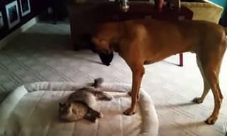 Estos Gatos Prefieren Dormir En La Cama Del Perro