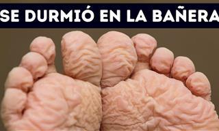 55 Hechos Breves Sobre El Cuerpo Que Te Dejarán Boquiabierto